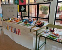 Exposición de los trabajos de biología del alumnado de 1º de ESO
