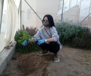 Nueva plantación en nuestro huerto escolar